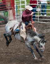 photo:  Rodeo bronco rider